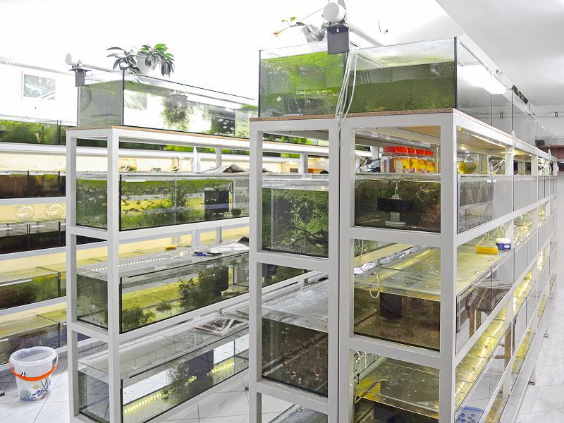 Akvária a Terária